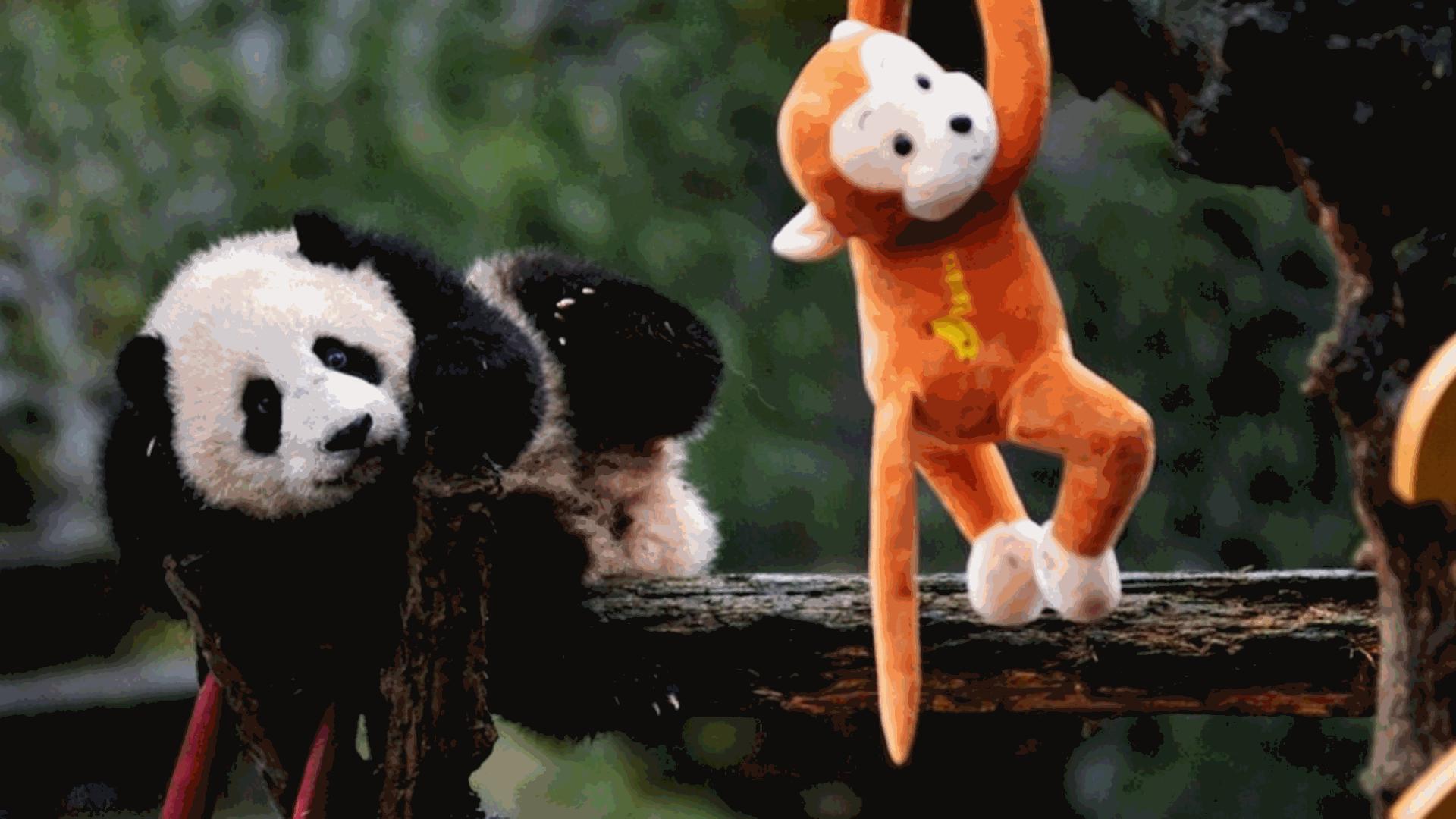 open excel sheet pandas